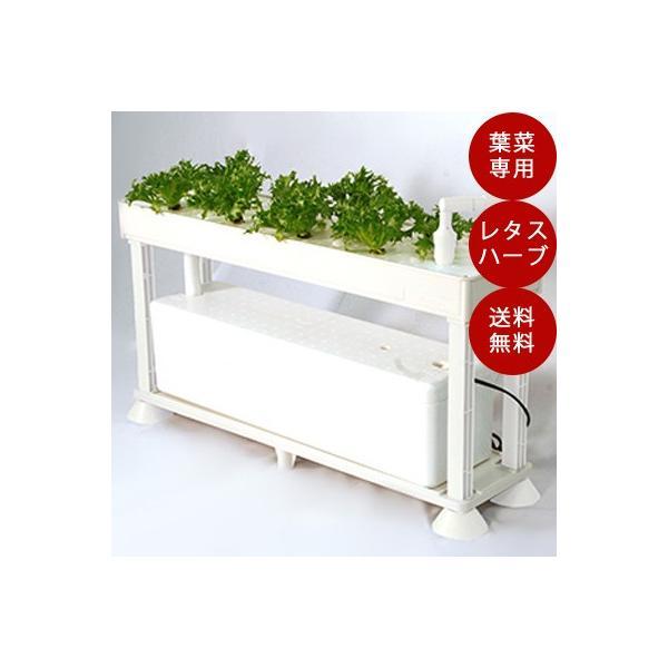 水耕栽培 ホームハイポニカ PLAABO プラーボ 水耕栽培キット 野菜 花 イチゴ 液体 肥料 スポンジ