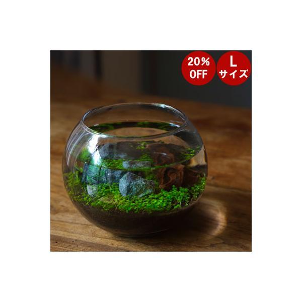 育てる水草Lサイズレイアウト アクアリウム水槽テラリウム室内栽培キットセット苔水栽培
