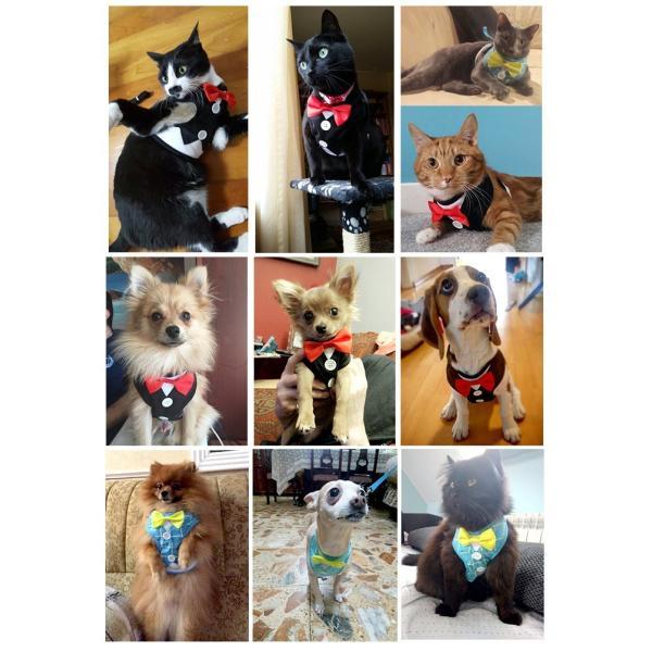犬 猫 ハーネス リード ペット 服  ウェアハーネス 胴輪 キャット ドッグ リーシュ リボン タキシード|sevenbridge|03