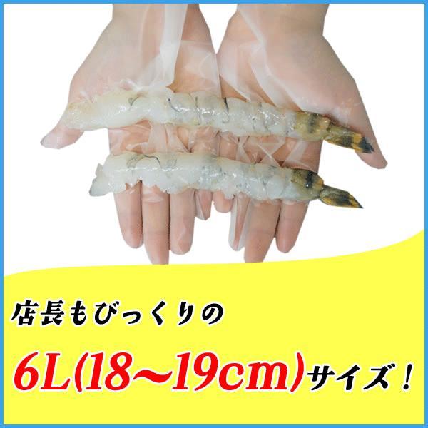 ブラックタイガーの特大伸ばし海老 1本18.5cmがたっぷり10尾入 エビ えび|sfd-ymd|03