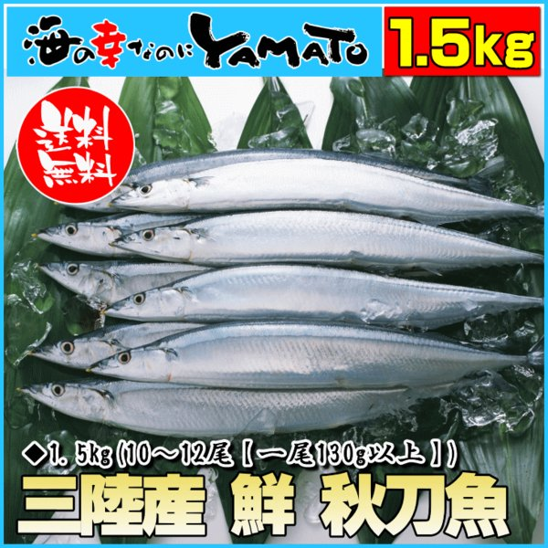 三陸産 鮮 秋刀魚 1尾130g以上保証 総重1.5kg(10〜12尾入が目安となります) 生さんま サンマ|sfd-ymd