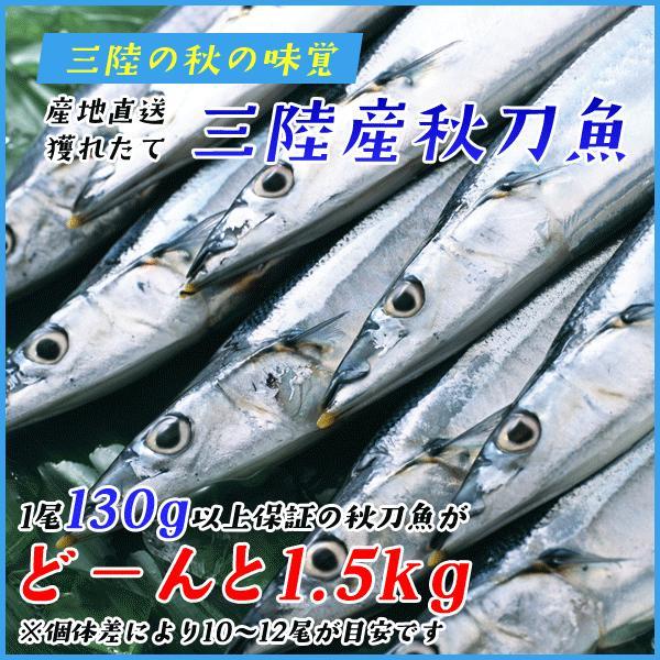 三陸産 鮮 秋刀魚 1尾130g以上保証 総重1.5kg(10〜12尾入が目安となります) 生さんま サンマ|sfd-ymd|02
