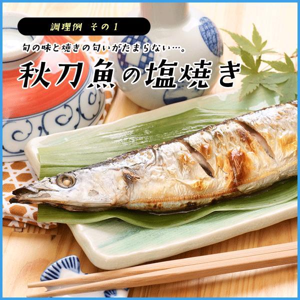 三陸産 鮮 秋刀魚 1尾130g以上保証 総重1.5kg(10〜12尾入が目安となります) 生さんま サンマ|sfd-ymd|08