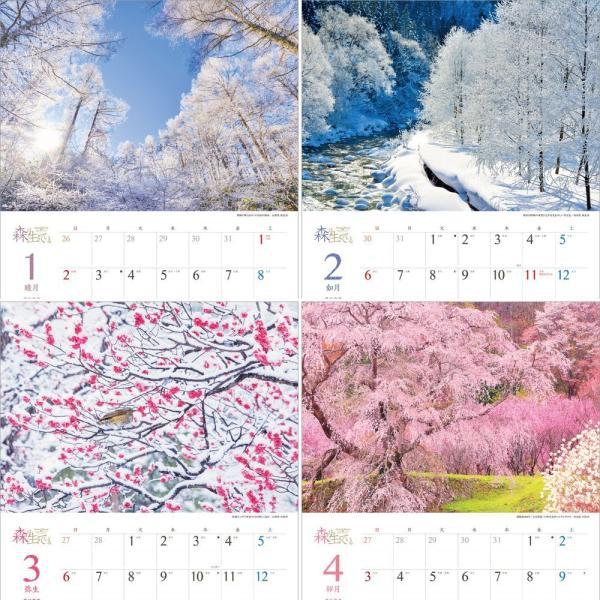 カレンダー2021 壁掛け 「森は生きている」自然 緑 綺麗 写真 秋 風景 絶景 お洒落 スケジュール shashinkoubou 03