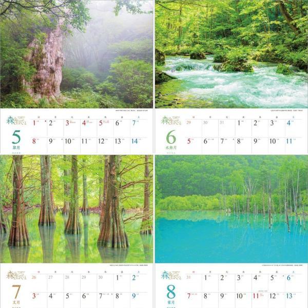 カレンダー2021 壁掛け 「森は生きている」自然 緑 綺麗 写真 秋 風景 絶景 お洒落 スケジュール shashinkoubou 04