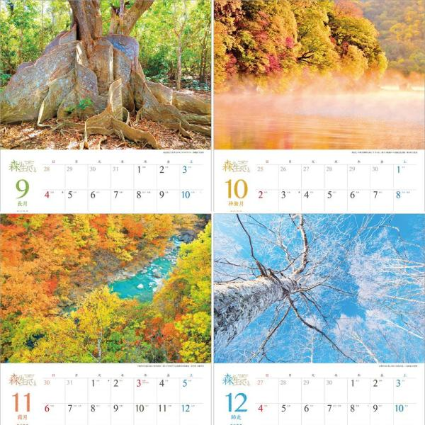 カレンダー2021 壁掛け 「森は生きている」自然 緑 綺麗 写真 秋 風景 絶景 お洒落 スケジュール shashinkoubou 05