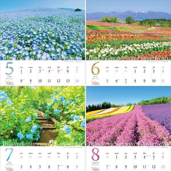 カレンダー2021 壁掛け 「日本一美しい花風景を散歩する」写真 風景 絶景 綺麗 お洒落 ギフト スケジュール|shashinkoubou|04