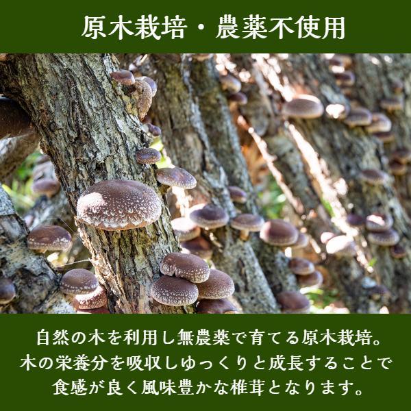 干ししいたけ 大分県産 100g 送料無料 原木栽培 (干し椎茸 干しシイタケ)|shiitake-isekyu|04