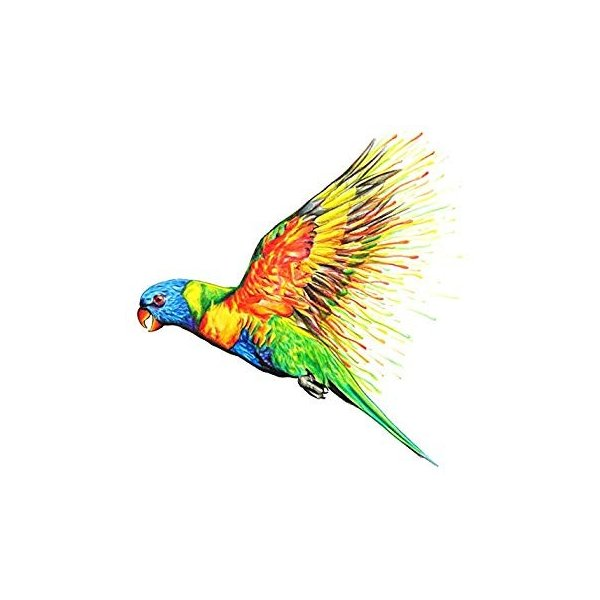 カメレオンペン 色鉛筆 油性 25本 50色 グラデーション(大人の塗り絵 イラスト画材)-正規品 shimizunet004 08