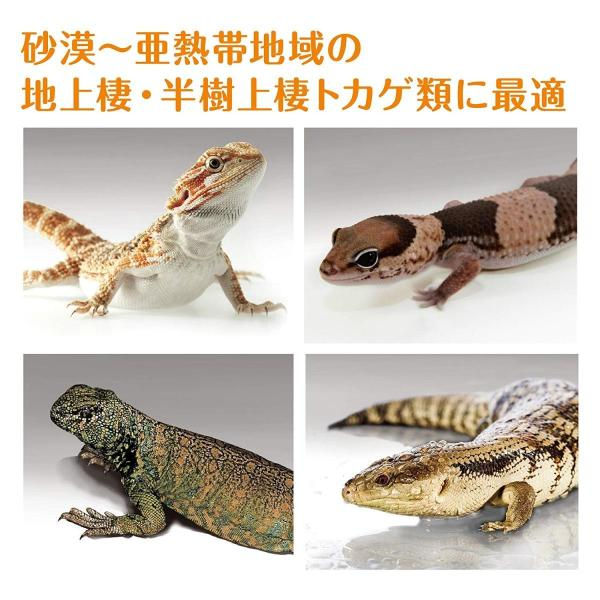 ジェックス エキゾテラ デザートソイル 2kg 爬虫類飼育用ソイル|shimizusyouten01