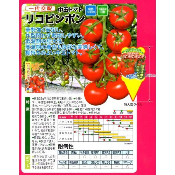 【ミニトマト種子】 ナント種苗  中玉ミディトマト 「リコピンポン」(りこぴんぽん) 15粒 ★新タネは12月以降のお届けを予定