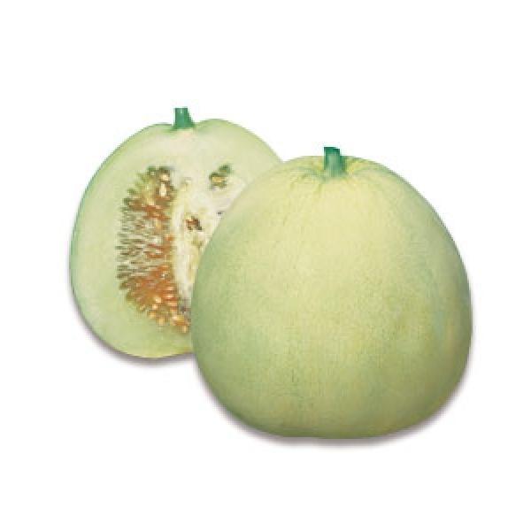 【メロン】タキイ種苗 ニューメロン 50粒 ★新タネは種子切り替えの1月以降のお届を予定