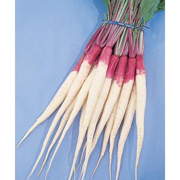 【かぶ】 京野菜 日野菜蕪(ひのなかぶ) 小袋 ★新タネは6月以降となります