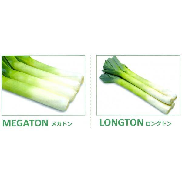 【ねぎ(西洋ねぎ)種子】 丸種  LEEK!リーキ(ポアロネギ)「メガトン(MEGATON)」「ロングトン(LONGTON)」 コート2500粒