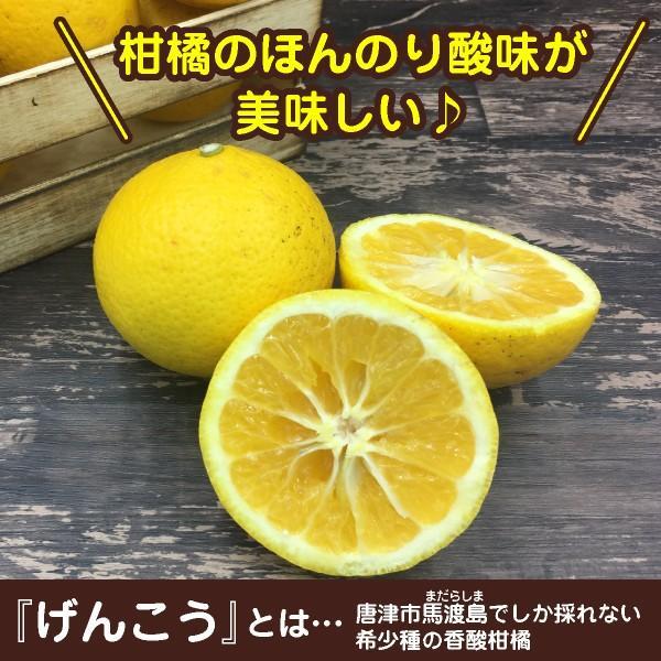 幻の柑橘使用「げんこう飴」 お得な5袋セット(420円/袋)|shioyu-naginoto|02