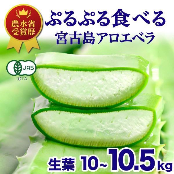 アロエベラ アロエ 生葉 10kg|shirounouen