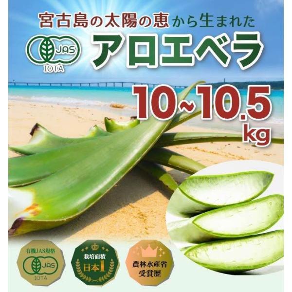 アロエベラ アロエ 生葉 10kg|shirounouen|02
