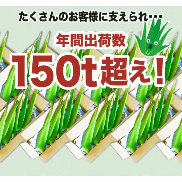 アロエベラ アロエ 生葉 10kg|shirounouen|04