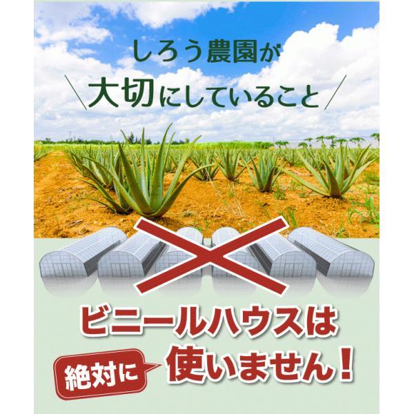アロエベラ アロエ 生葉 10kg|shirounouen|06
