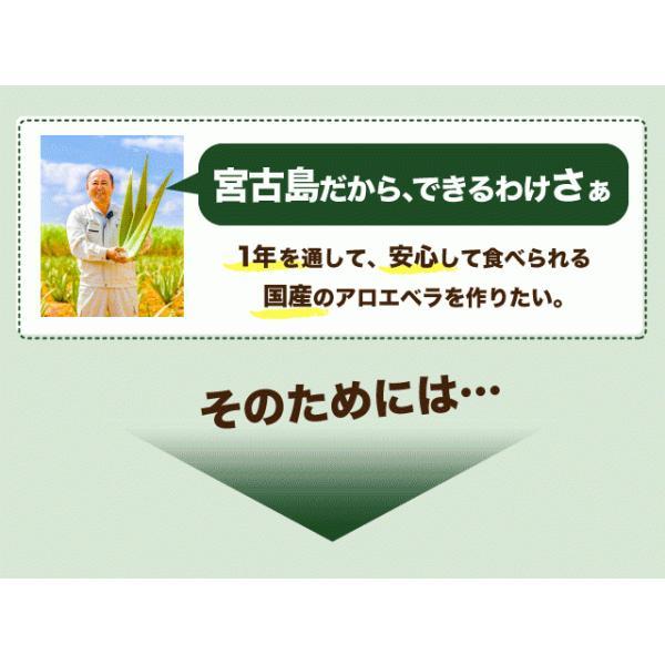 アロエベラ アロエ 生葉 10kg|shirounouen|07
