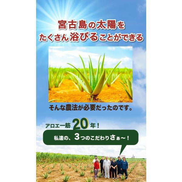 アロエベラ アロエ 生葉 10kg|shirounouen|08