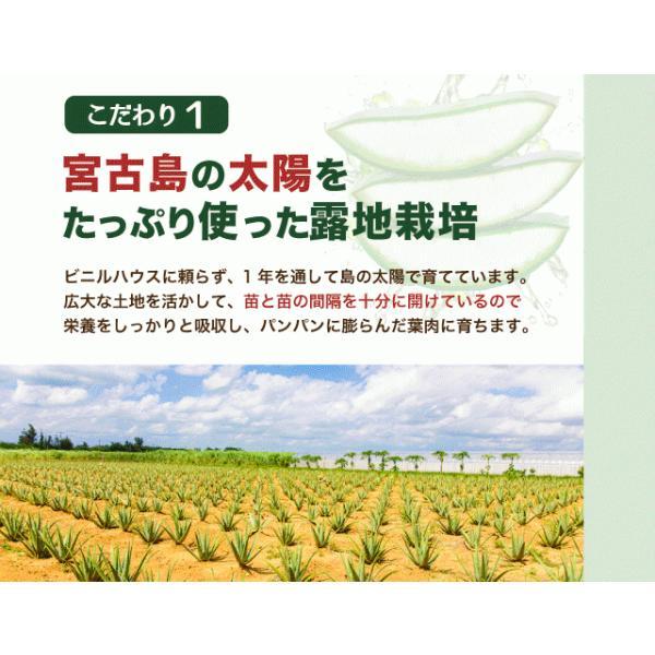 アロエベラ アロエ 生葉 10kg|shirounouen|09
