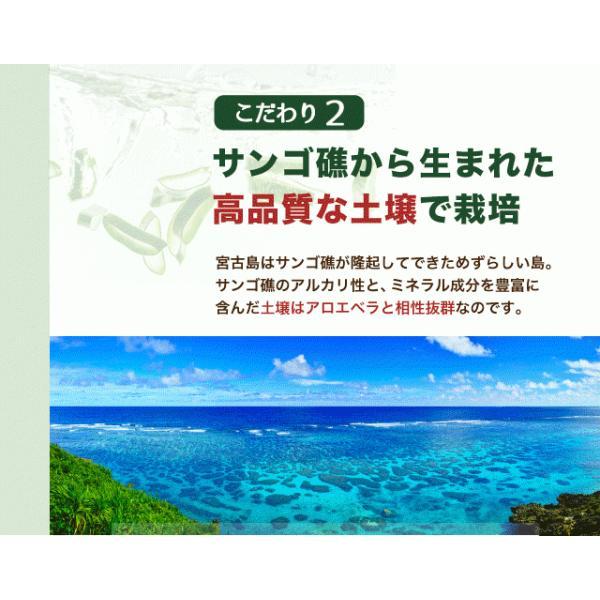 アロエベラ アロエ 生葉 10kg|shirounouen|10