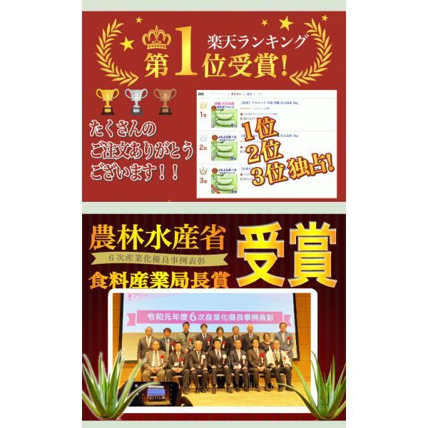 アロエベラ アロエ 苗 10株|shirounouen|03
