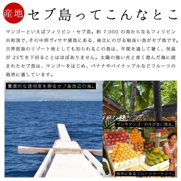 マンゴー わけあり訳あり マンゴー ドライマンゴー 不揃いの端っこセブ島半生ドライマンゴー 1kg(500g×2) 送料無料 ポイント消化|shizennoyakata|03