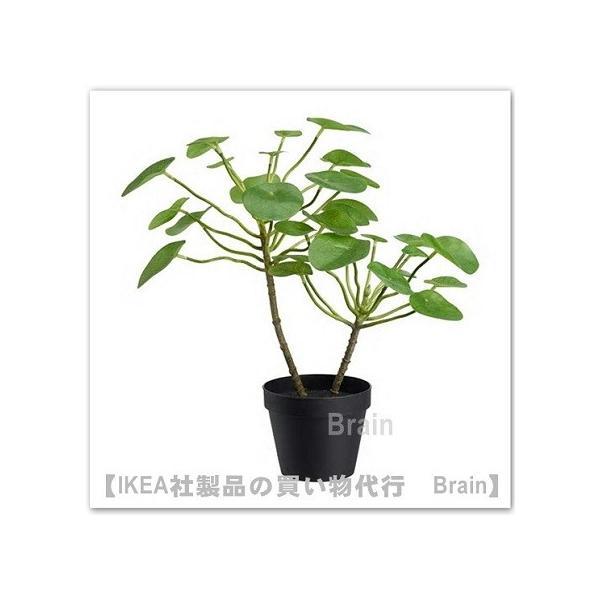 IKEA/イケア FEJKA 人工観葉植物40 cm ピレア