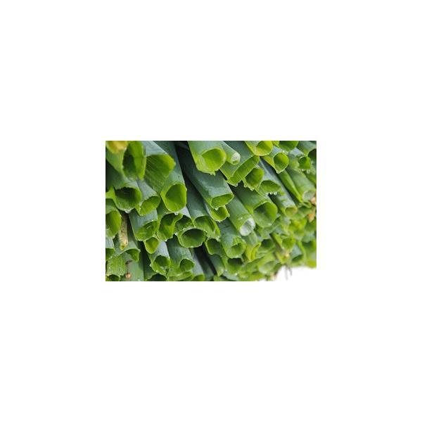 送料無料 鳥取県 季節 野菜 詰合せ 5〜6種類 約3.5kg〜4kg 野菜 詰め合わせ セット 新鮮な旬野菜をお届け|shop-daisenbou|03