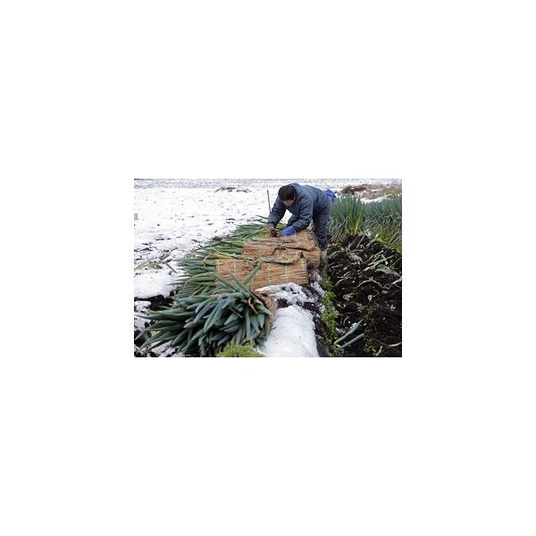 送料無料 鳥取県 季節 野菜 詰合せ 5〜6種類 約3.5kg〜4kg 野菜 詰め合わせ セット 新鮮な旬野菜をお届け|shop-daisenbou|04