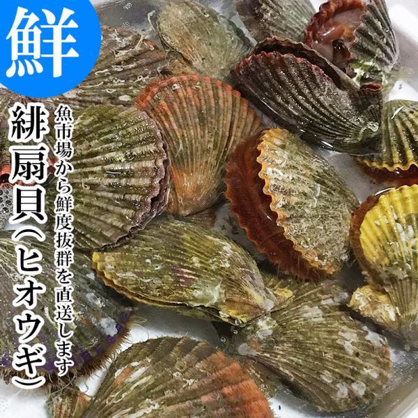 大分県産 活きひおうぎ貝 10枚 緋扇貝/ヒオウギガイ