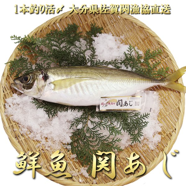鮮魚 関アジ 約400gx1尾 一本釣り活け締め 関あじ 鯵 佐賀関漁業協同組合ブランド