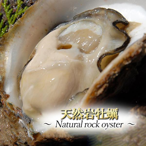 天然活き岩牡蠣 7〜13個 約3kg 大分県産 大分市公設地方卸売市場直送 かき カキ 加熱用