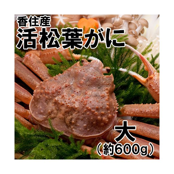香住産・活松葉がに(大)(約600g)1匹(カニ かに 蟹 ズワイガニ ずわいがに 松葉ガニ 松葉蟹 お取り寄せ 産地直送)