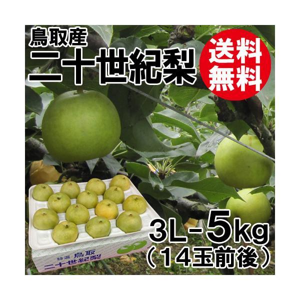 [贈答用]鳥取産・二十世紀梨[20世紀梨]3L-5kg(14玉前後)[送料無料]