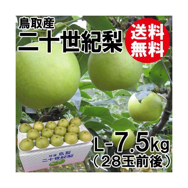 [贈答用]鳥取産・二十世紀梨[20世紀梨]L-7.5kg(28玉前後)[送料無料]
