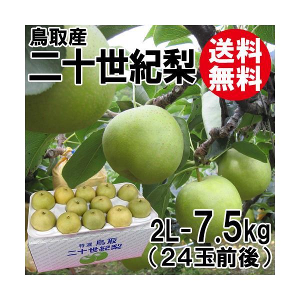 [贈答用]鳥取産・二十世紀梨[20世紀梨]2L-7.5kg(24玉前後)[送料無料]