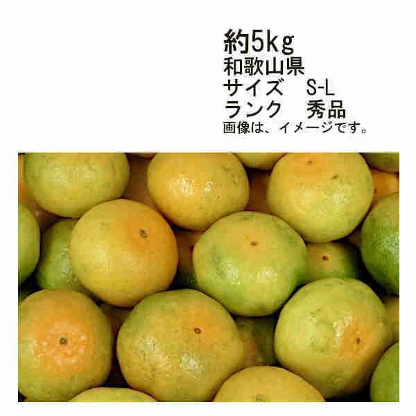 送料無料 10月上旬以降発送予定 着日指定不可 藤徳みかん 和歌山県 約5kg サイズ S-L寸 ランク 秀品