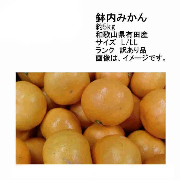 送料無料 予約 11月末以降発送 有田産 鉢内みかん 和歌山県産 約5kg 訳あり品 サイズL/LL