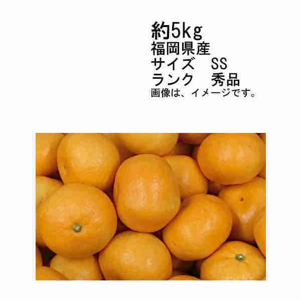 送料無料 予約 11月上旬以降発送 山川みかん マイルド130 福岡県 約5kg サイズSS 秀品