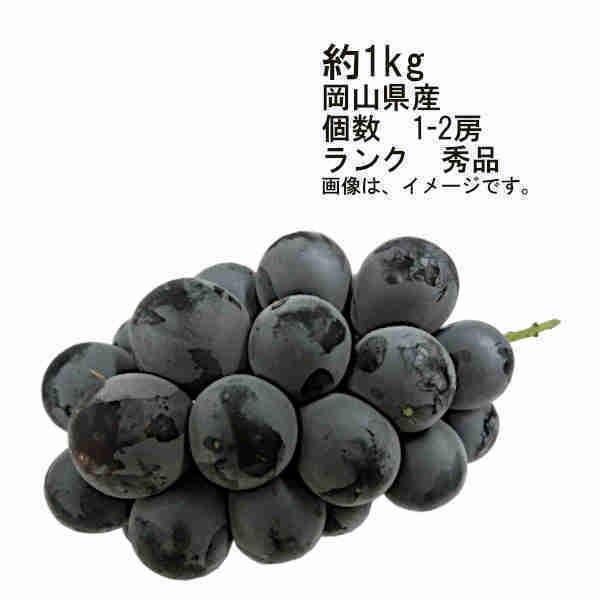送料無料 予約 7月下旬以降出荷予定 種なしぶどう ニューピオーネ ぶどう 岡山県 約1kg 1-2房 ランク 秀品