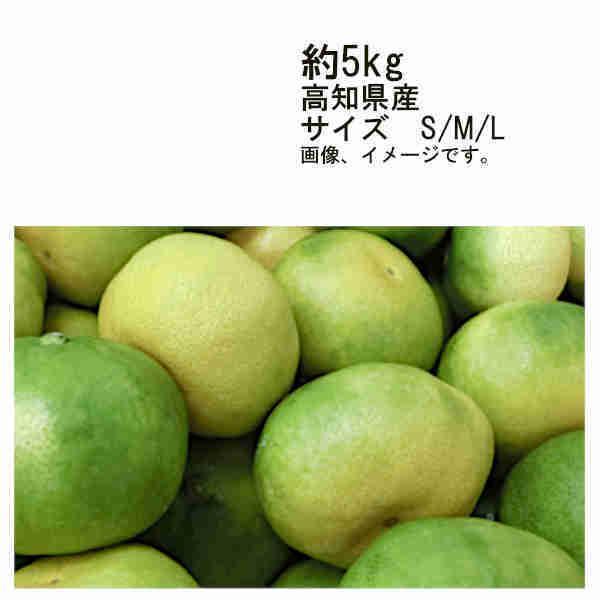 送料無料 グリーンハウスみかん 山北 高知県産 約5kg サイズ S/M/L