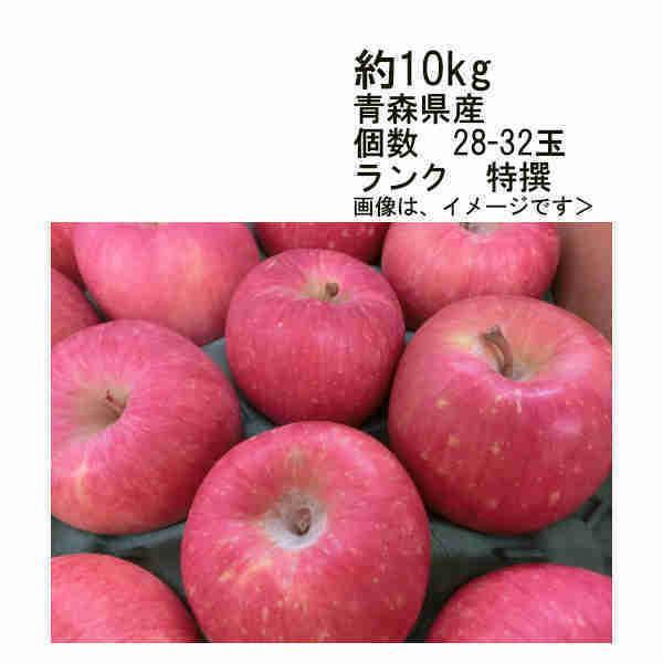 送料無料 ふじりんご 青森県産 約10kg 28-32玉入 ランク 特選
