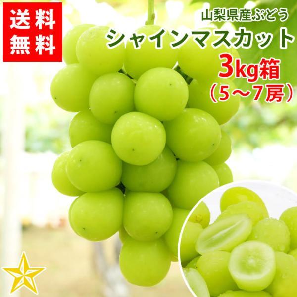 ぶどう シャインマスカット 山梨県産 送料無料 農家直送 大人気品種 シャインマスカット3kg箱 (5〜7房)