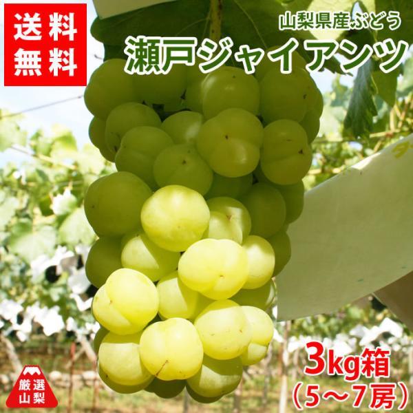 ぶどう 瀬戸ジャイアンツ 山梨県産 送料無料 農家直送 種なしブドウ 瀬戸ジャイアンツ3kg箱 (5〜7房)