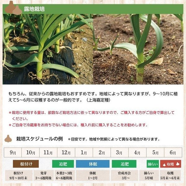 バラシにんにく 1kg×10ネット 中国産 上海嘉定種(ホワイト) shougakoubou 06