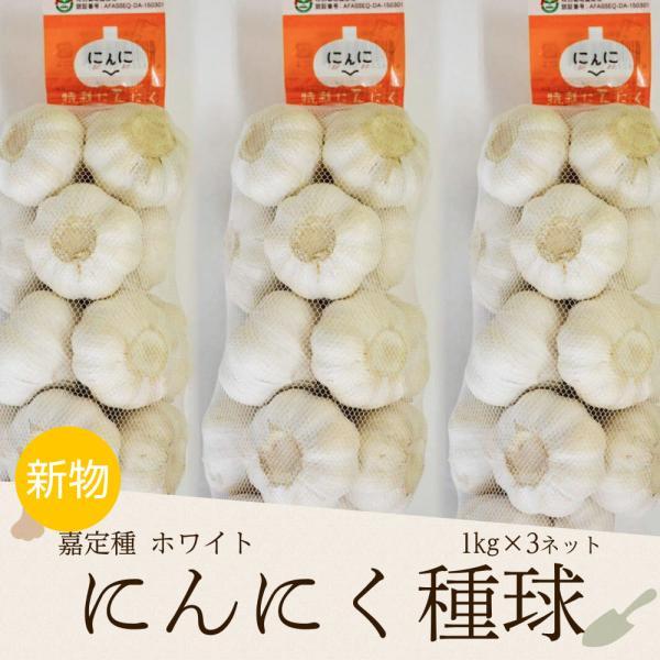 特裁にんにく(嘉定種ホワイトにんにく種球) 1kg×3ネット 中国産