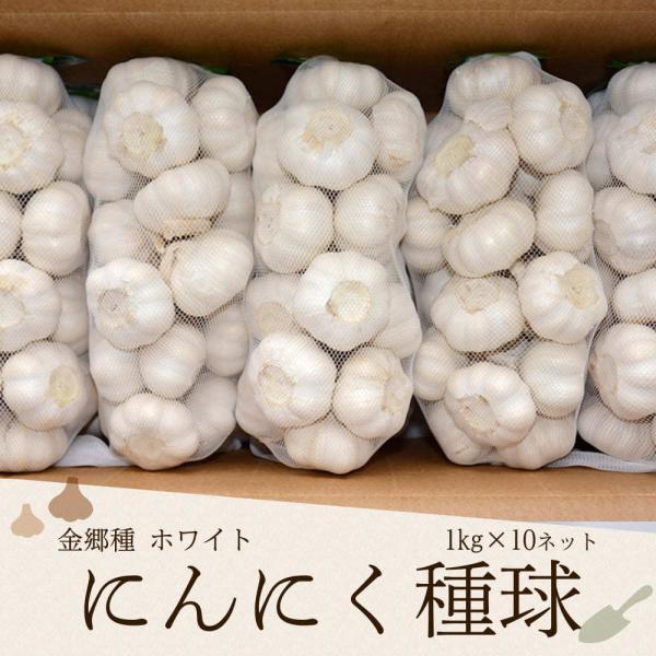 にんにく種球 1kg×10ネット 中国産 送料無料(沖縄、離島を除く) 上海嘉定種(ホワイト)[ニンニク 種 中国産 にんにく 種子 にんにく種]|shougakoubou